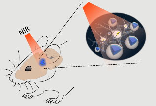 Upconversion Nanoparticles Used for Stimulation and Inhibition of Deep Brain Structures