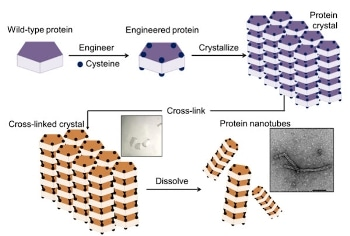 Researchers Successfully Build Nanotubes from Protein Crystals