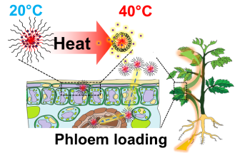 Nanoparticles Could Deliver Heat Stress Relief to Plants