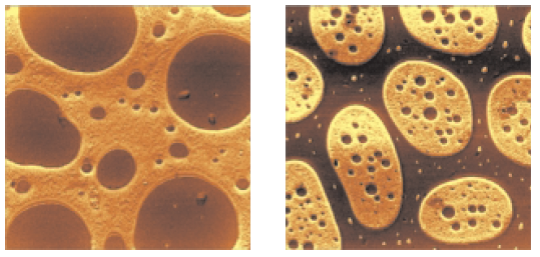 Adhesion maps of the thin film of SBR-PMMA (left) and SBS-PMMA (right).